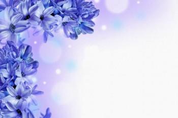 107. Поздравление: Синие цветы углом