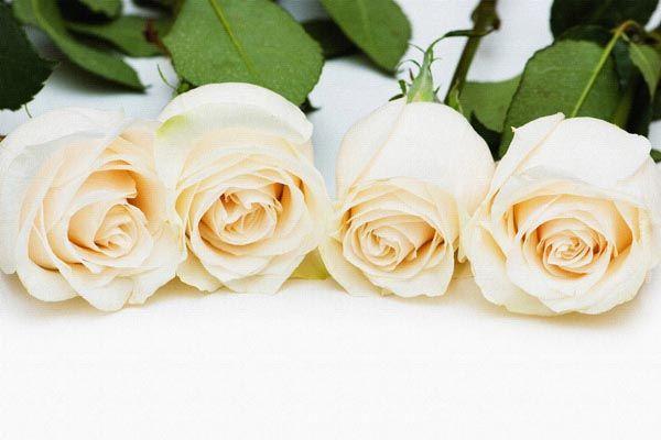 110. Поздравление: Чайные розы