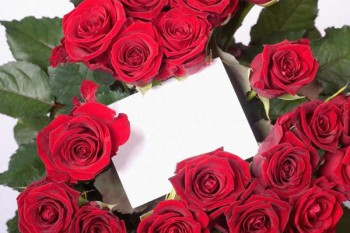 117. Поздравление: Рамка из бардовых роз