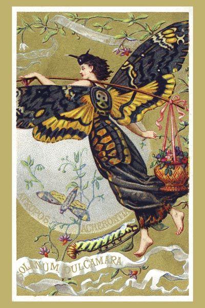 028. Ретро плакат западных стран: Atropos Acherontia, Solanum Dulcamara, eau des Carmes Boyer Perfume Victorian Trade Card