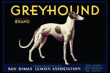 170. Иностранный плакат: Greyhound brand