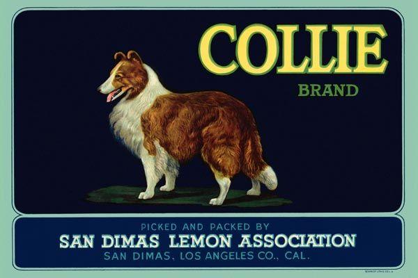 172. Иностранный плакат: Collie brand