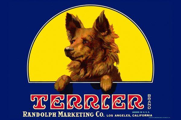 173. Иностранный плакат: Terrier brand