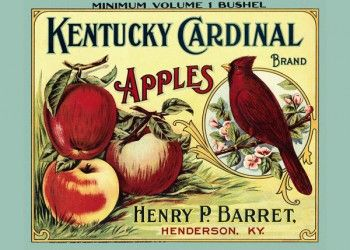 176. Иностранный плакат: Kentucky Cardinal brand Apples