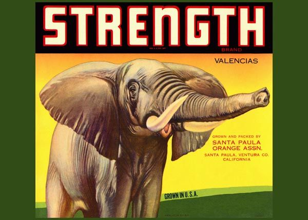 189. Иностранный плакат: Strength brand