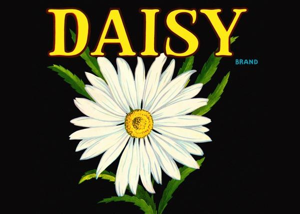 192. Иностранный плакат: Daisy brand