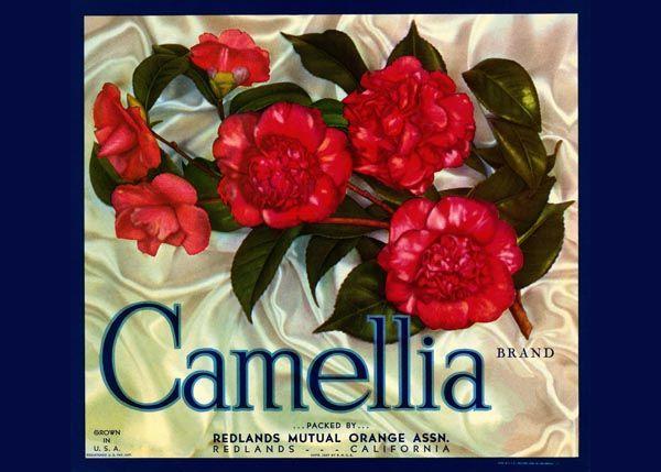 198. Иностранный плакат: Camellia brand