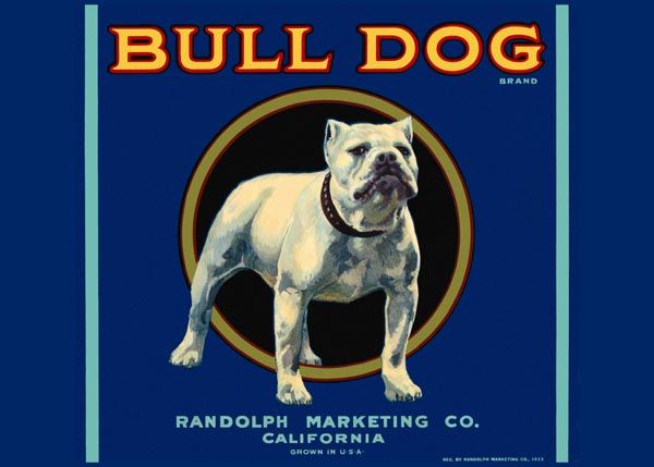 214. Иностранный плакат: Bull Dog brand