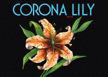 228. Иностранный плакат: Corona Lily brand
