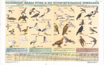 0861. Военный ретро плакат: Основные виды птиц и их отличительные признаки