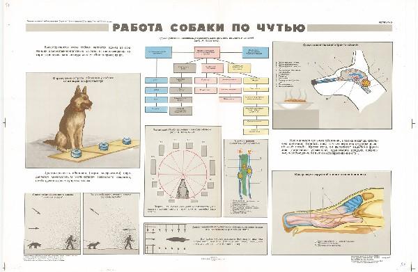 0865. Военный ретро плакат: Работа собаки по чутью