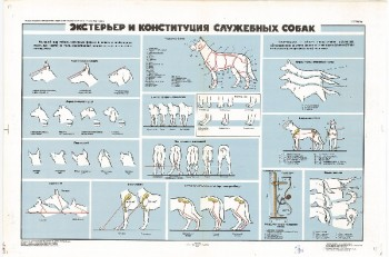 0870. Военный ретро плакат: Экстерьер и конституция служебных собак