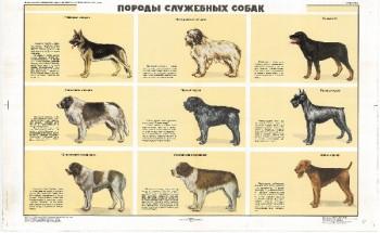 0871. Военный ретро плакат: Породы служебных собак