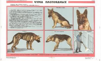 0874. Военный ретро плакат: Чума плотоядных
