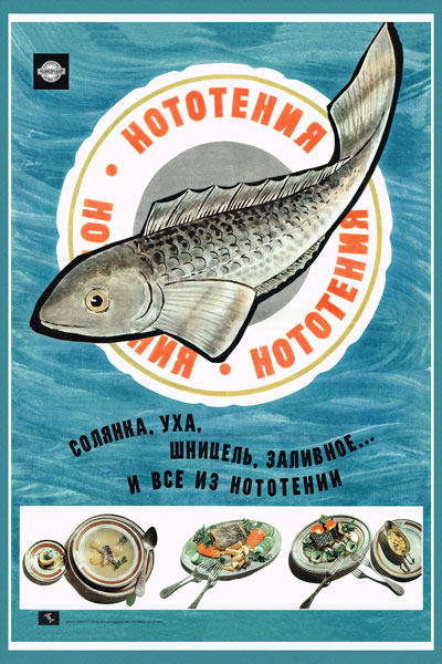 422. Советский плакат: Нототения
