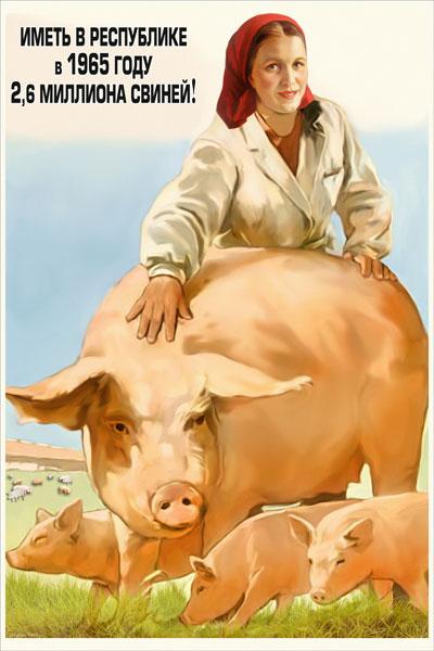1218. Советский плакат: Иметь в республике в 1965 году 2,6 миллиона свиней!