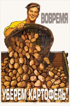 1280. Советский плакат: Вовремя уберем картофель!