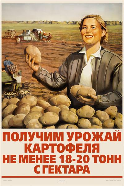 1281. Советский плакат: Получим урожай картофеля не менее 18 - 20 тонн с гектара