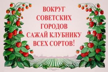 767. Советский плакат: Вокруг советских городов сажай клубнику всех сортов!